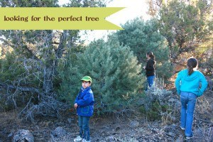 thanksgiving 2011 looking for the perfect tree