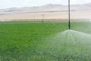 IMG_2378- sprinkler on pivot
