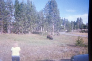 Abby's camera Yellowstone