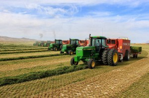 Baling with 7 balers 04
