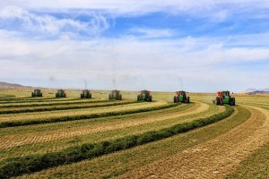 Baling with 7 balers 03