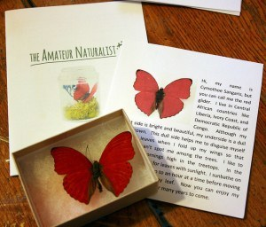 amateur naturalist kit 03 sangria butterfly