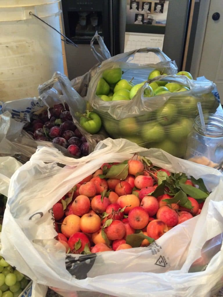plums, crab apples, apples